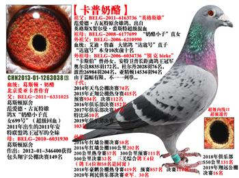北京爱亚卡普奶酪家族,公棚特比环获奖鸽拍卖中